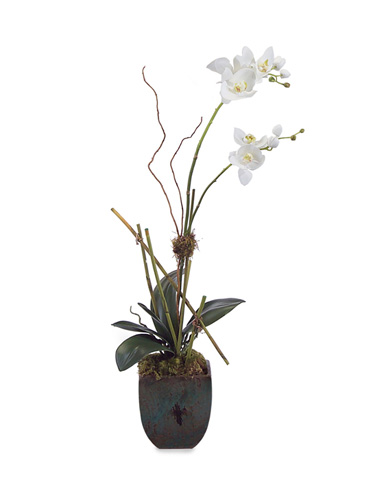 John Richard Collection - Organic Orchid - JRB-2659