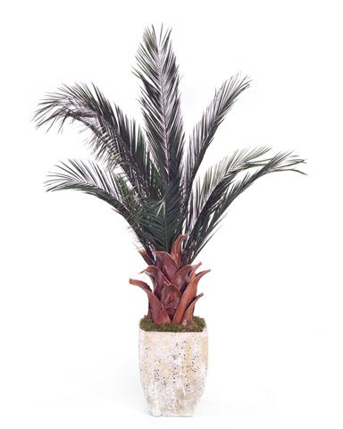 John Richard Collection - Date Palm - JRB-2772