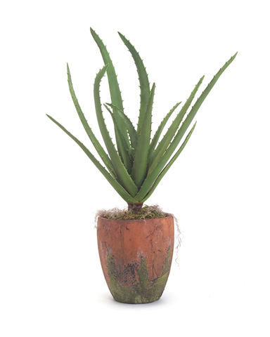 John Richard Collection - Natural Aloe - JRB-2795