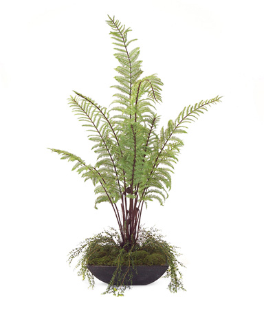 John Richard Collection - Garden Fern - JRB-2871