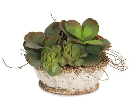 John Richard Collection - Garden Succulents - JRB-3170