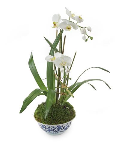 John Richard Collection - Blue Orchids - JRB-3209