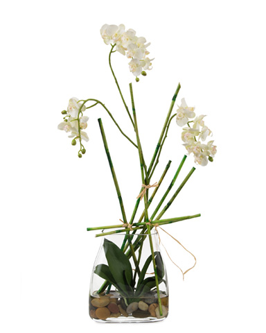 John Richard Collection - Weeping Orchid - JRB-3236W