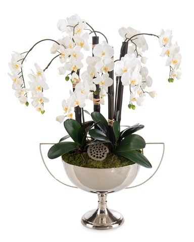 John Richard Collection - Orchid Reflections - JRB-3436