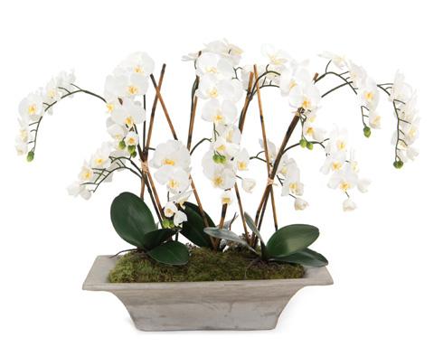 John Richard Collection - Armature Orchids - JRB-3437