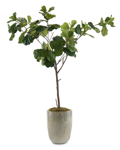 John Richard Collection - Fiddle Leaf Fig B - JRB-3457