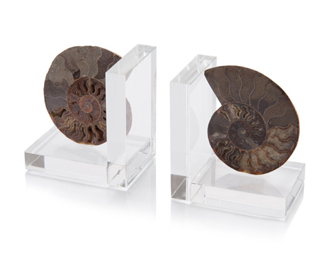 John Richard Collection - Two Ammonites On Crystal Bookends - JRA-10059S2