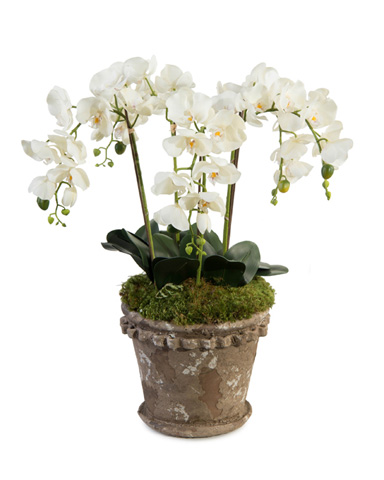 John Richard Collection - Crusty Orchid Pot - JRB-3588