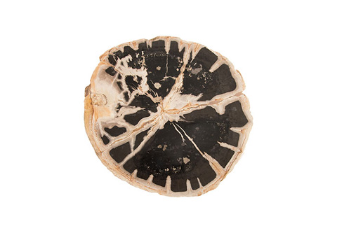 Phillips Collection - Round Petrified Slice - ID77387