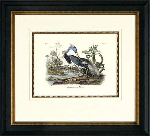 Picture Source, The - Louisiana Heron - A050B