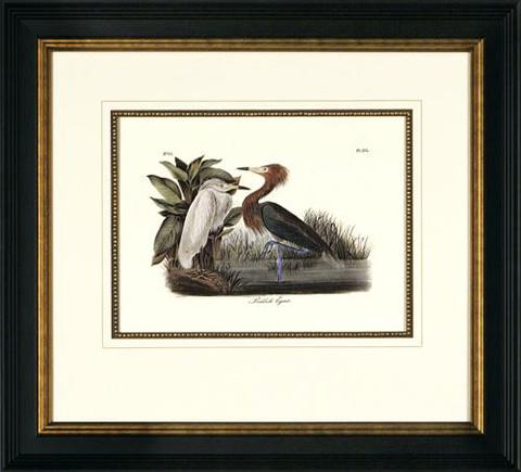 The Picture Source - Reddish Egret - A050C