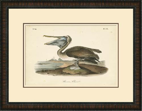 The Picture Source - Brown Pelican - A294A