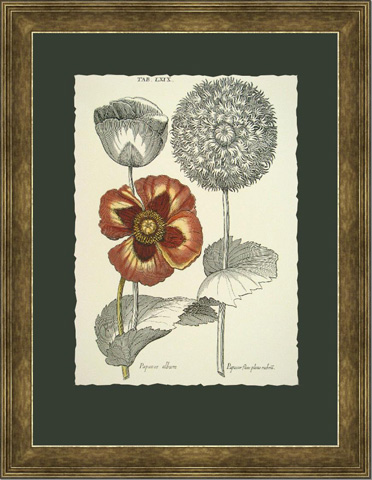 Picture Source, The - Tinted Floral II - B104A