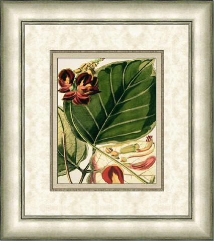 The Picture Source - Fantastical Botanical I - C636A