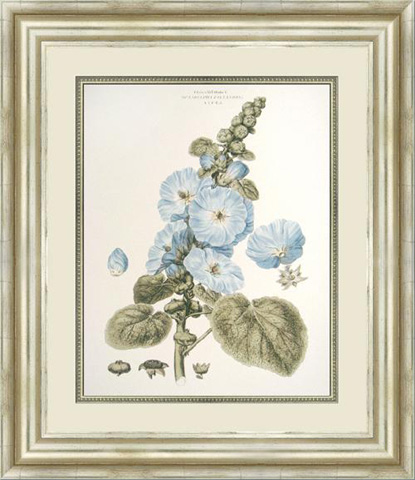 The Picture Source - Bashful Blue Floral IV - M210D