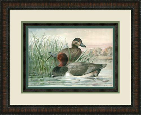 The Picture Source - Red Headed Ducks - P122C