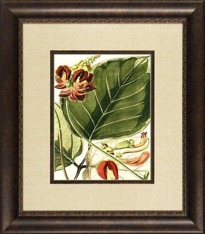 The Picture Source - Fantastical Botanical I - PG01A