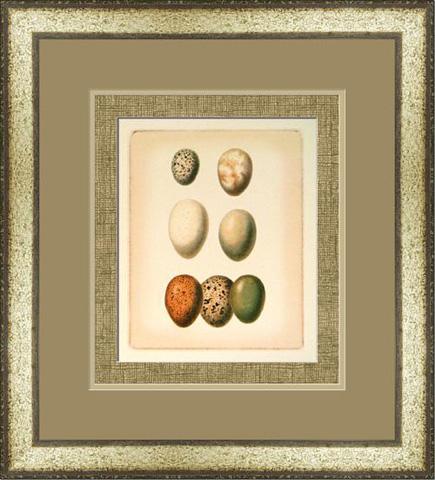 The Picture Source - Bird Egg Study II - U187B