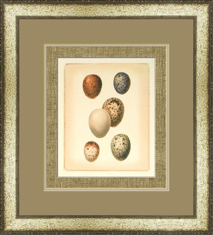 The Picture Source - Bird Egg Study III - U187C