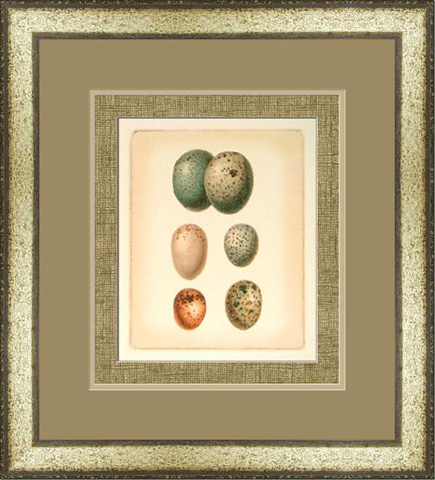 The Picture Source - Bird Egg Study IV - U187D