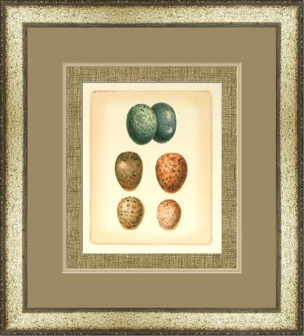 The Picture Source - Bird Egg Study V - U187E