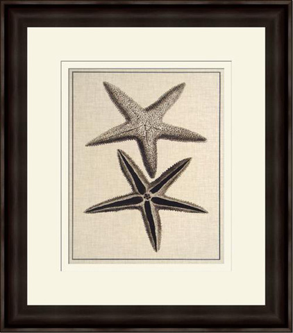 Picture Source, The - Coastal Starfish In Sepia III - V112B