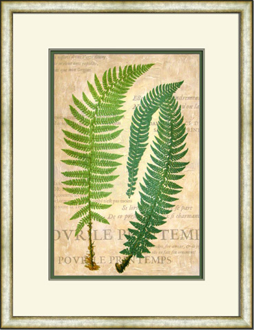 The Picture Source - Fern Folio III - V149B