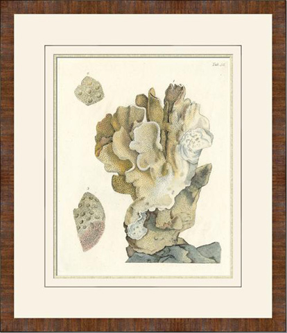 The Picture Source - Antique Coral IV - V546B