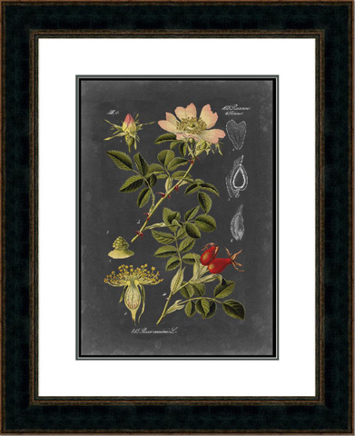 The Picture Source - Midnight Botanical I - V554A