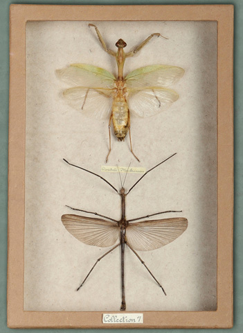 Sarreid Ltd. - Insect Box Mothes - 29431