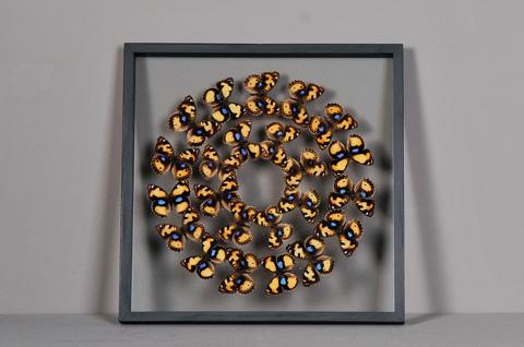 Sarreid Ltd. - Butterflies Box - 29440