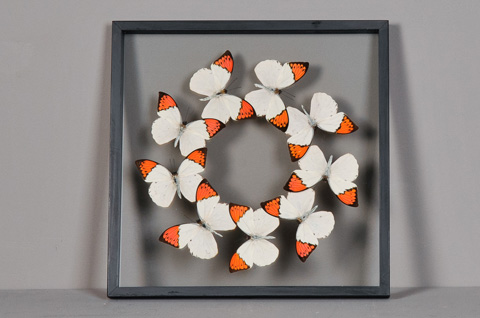 Sarreid Ltd. - Butterflies Box - 29441