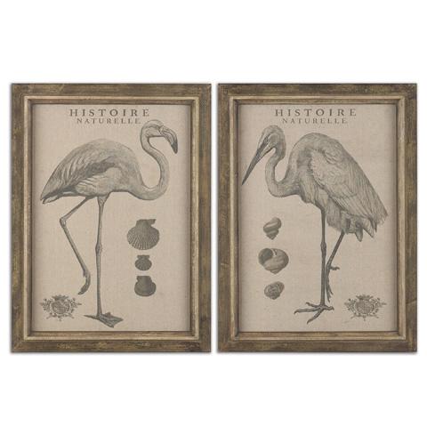 Uttermost Company - Natural History Wall Art - 51077