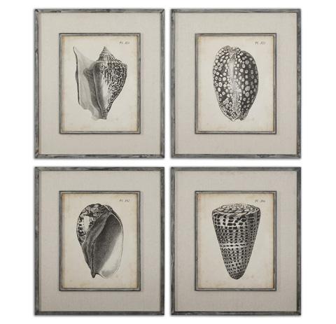 Uttermost Company - Vintage Diderot Shells Wall Art - 51088