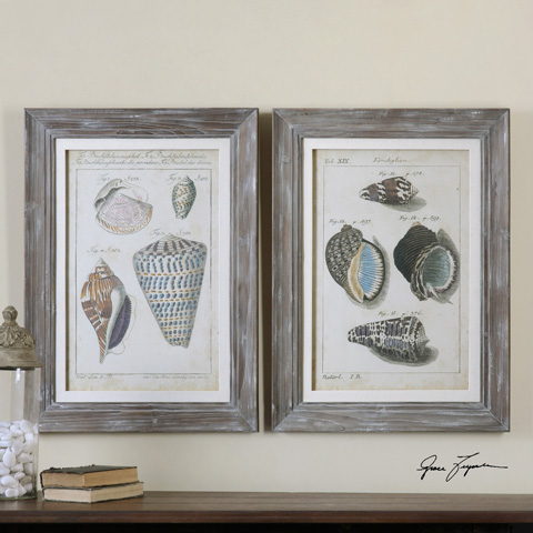 Uttermost Company - Vintage Shell Study Art - 41532