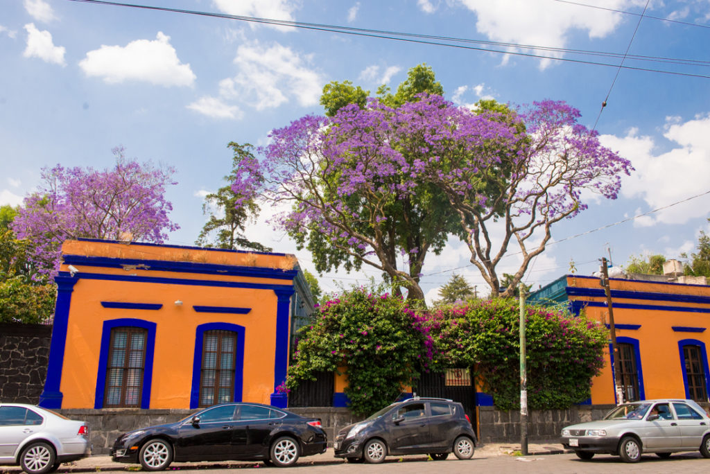 Violet Spring in Mexico! The best time for a Fluenz Spanish Immersion
