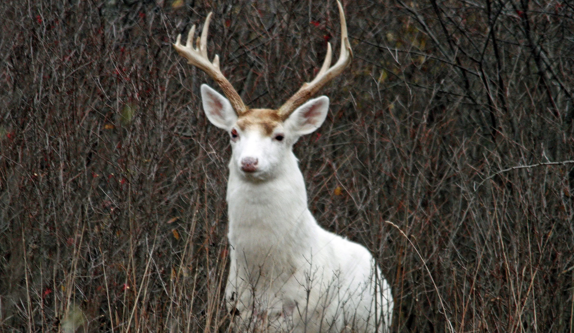 White Deer Tours of the Former Seneca Army Depot