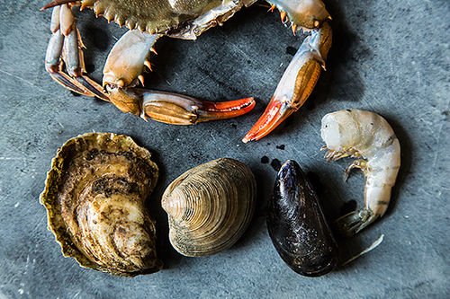 Your Best Shellfish
