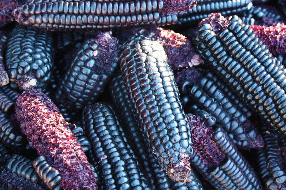 hopi corn