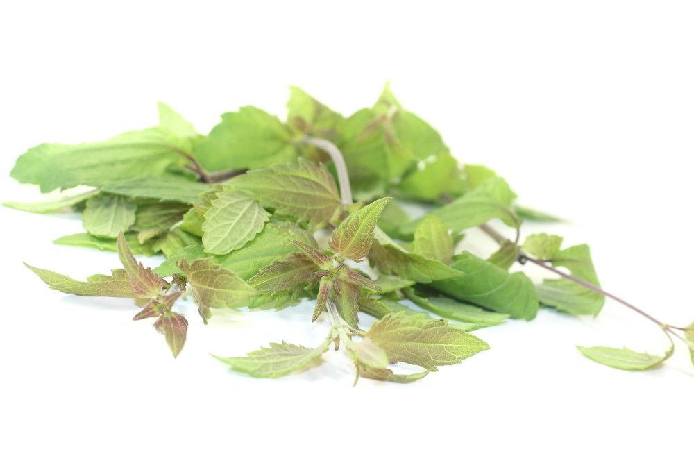 mexican dream herb