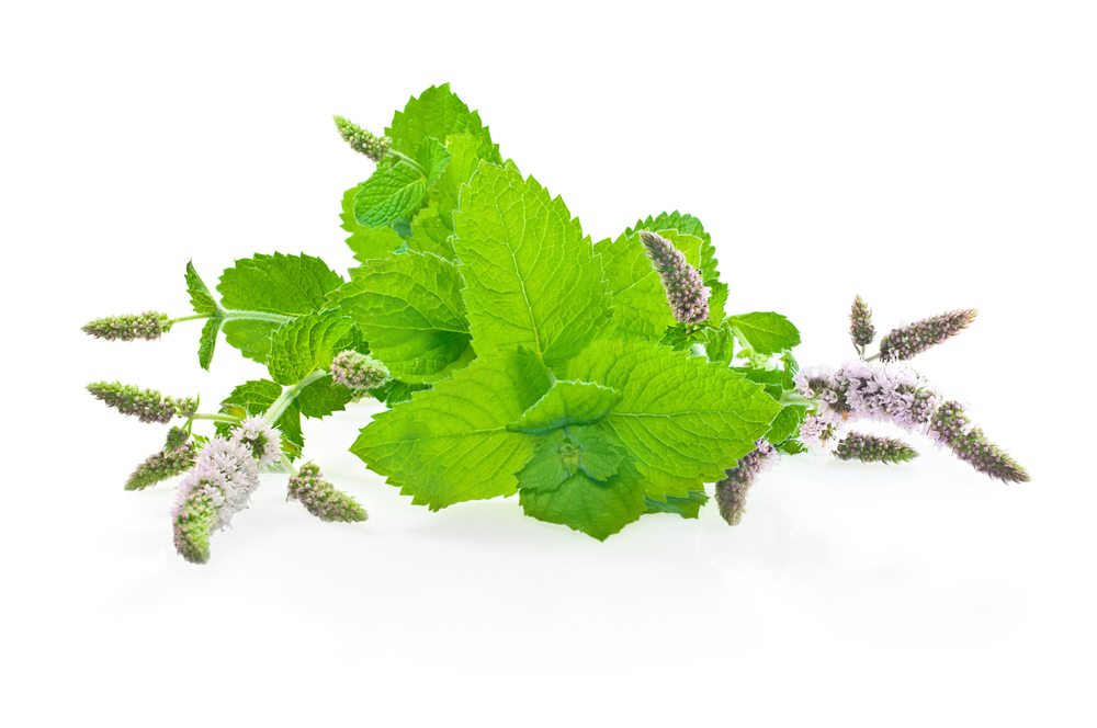 mint flower