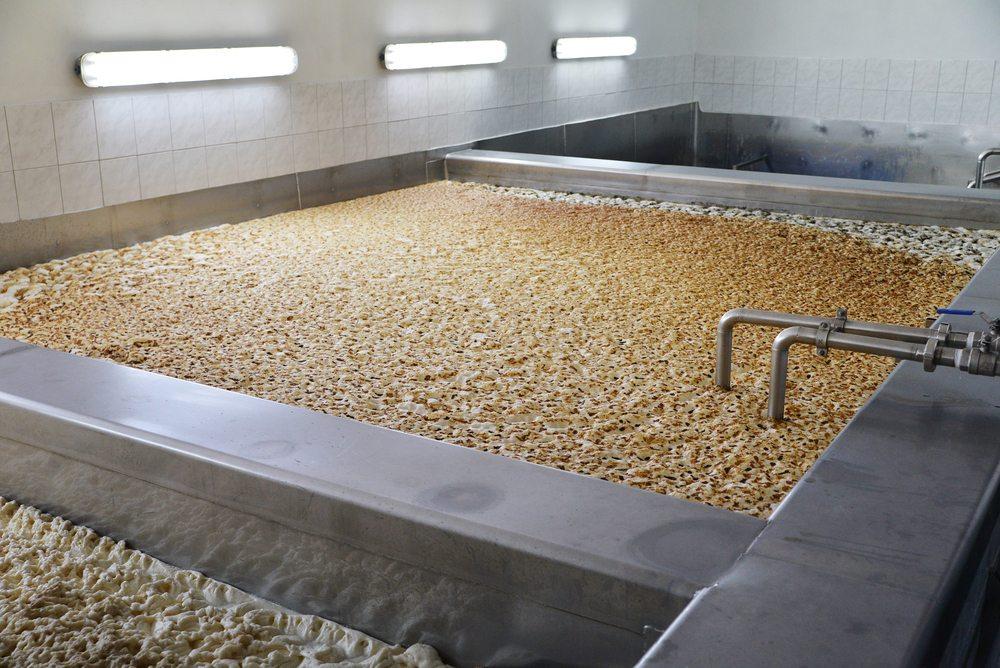 beer fermenting yeast