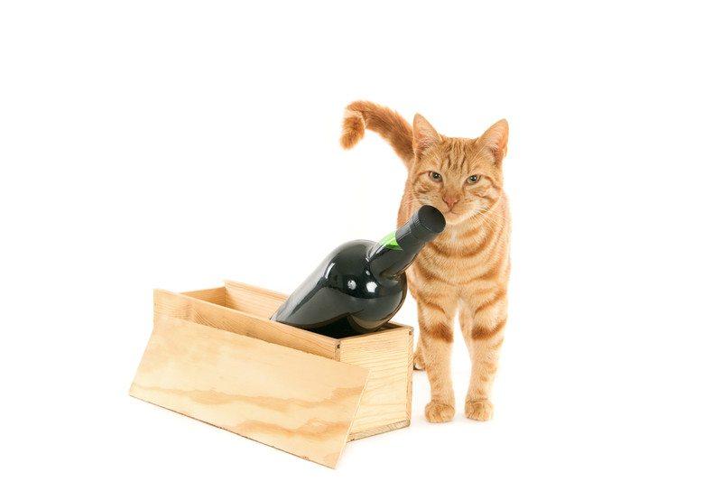 Cat with wine
