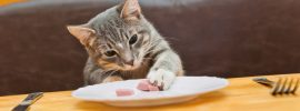Cat eating at a table