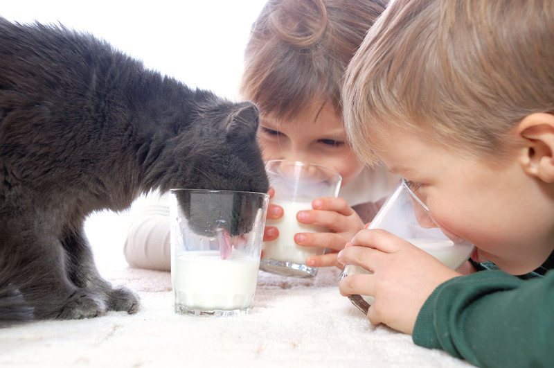 Cat and kid drink milk
