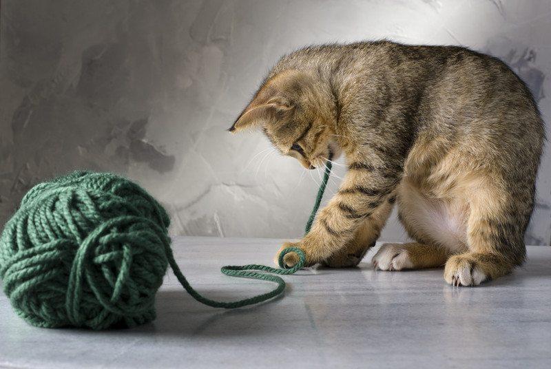 Cat eating string