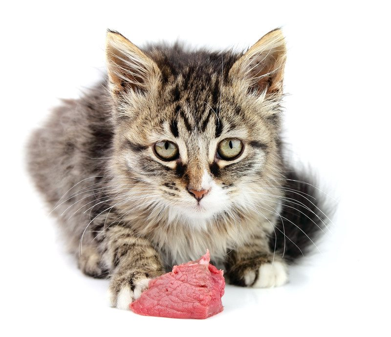 Cat raw meat