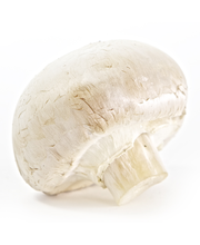 Mushrooms Whole Cello