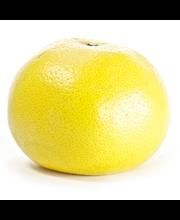 Grapefruit Florida Lg