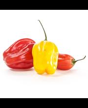 Habanero Pepper
